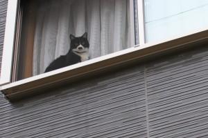 チャップリン猫